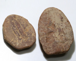 550 cts 300 Million Year old Fern Fossils  NA104