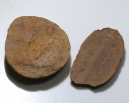350 cts 300 Million Year old Fern Fossils  NA106