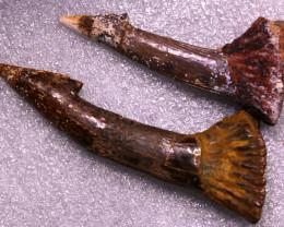 Treasures Collector set  two Barbed Dinosaur teeth  NA 521
