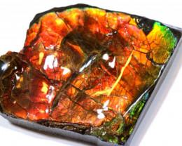 37.55 CTS AMMONITE SHELL FOSSIL SPECIMEN   RJA-1306