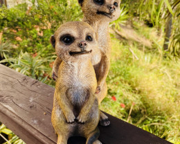 Treasures Box of large size Meerkat Cheeky Youngsters code  MEERCHEY