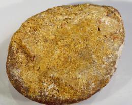 200Cts Fossil Dinosaur Bone Vertebra Morocco SU 251