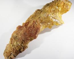 Auction #729415 520Cts Rare Jaw bone Fossil Morocco SU401