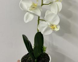 Treasure Box of Orchid in White Pot   Code PLAORCH