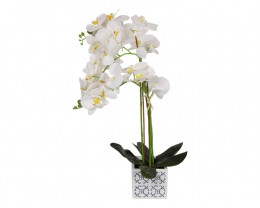 Orchid in Blue Willow Pot  Code FLOORWP