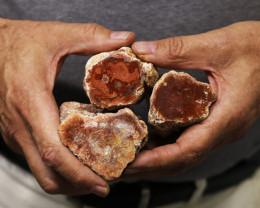 1.053 kilo  three   petrified  wood fossil   USA  Specimen  MM49