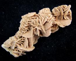 90Grams desert rose GG 2076