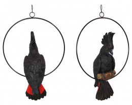 Black Cockatoo In Ring 2pcs  Code COCKBLR