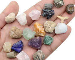 FOUR Educational Fossil and Minerals display AHA 410