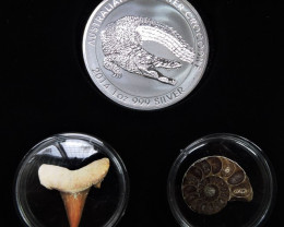 Silver Salt Crocodile with Ammonite & Shark tooth CC106