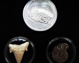 Silver Salt Crocodile with Ammonite & Shark tooth CC107