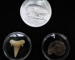 Silver Salt Crocodile with Ammonite & Shark tooth CC108