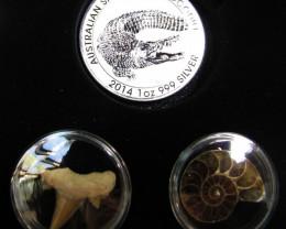 Silver Salt Crocodile with Ammonite & Shark tooth CC114