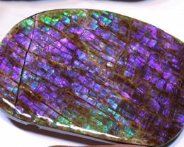 91.50- AMMONITE  PENDANT DRILLED  RJA -1619  Rarejewelry