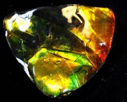 85.20- AMMONITE  PENDANT DRILLED  RJA -1624  Rarejewelry