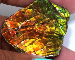 56.90 CTS AMMOLITE SPECIMEN  RJA-1627   Rarejewelry