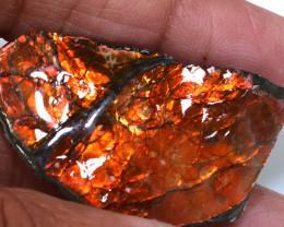 56.30 CTS AMMOLITE SPECIMEN  RJA-1628   Rarejewelry