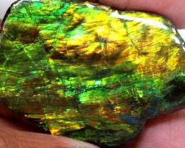 79.30 CTS AMMOLITE SPECIMEN  RJA-1630   Rarejewelry