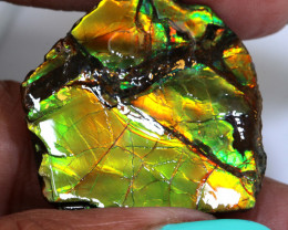 59CTS AMMOLITE SPECIMEN  RJA-1633   Rarejewelry