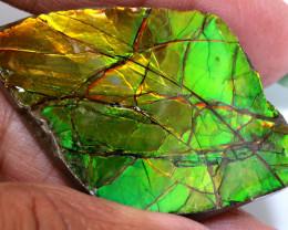 46.25CTS AMMOLITE SPECIMEN  RJA-1634   Rarejewelry