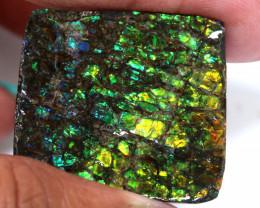56.60 CTS AMMOLITE SPECIMEN  RJA-1635   Rarejewelry