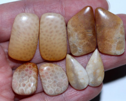 4 pairs coral fossils  AHA 1556