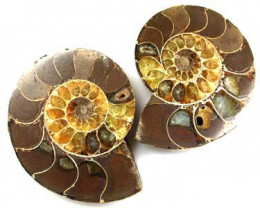 BEAUTIFUL AMMONITE SPLIT 315 CARATS CTS A899