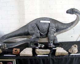 Australian Apatasaurus Dinosaur 1.3 Meters length