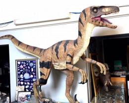 HUGE Velociraptor Dinosaur 1.6 Meter High