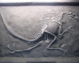 large velociaptor Skeleton display 1.8 meter length