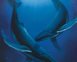 Song of the Deep, Limited Edition Lithograph,Wyland