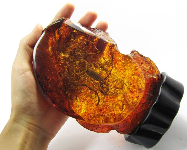 Real scorpion in Amber like display  MYGM 1685
