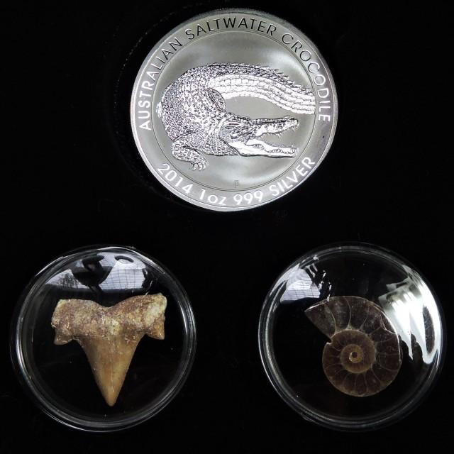 Silver Salt Crocodile with Ammonite & Shark tooth CC100