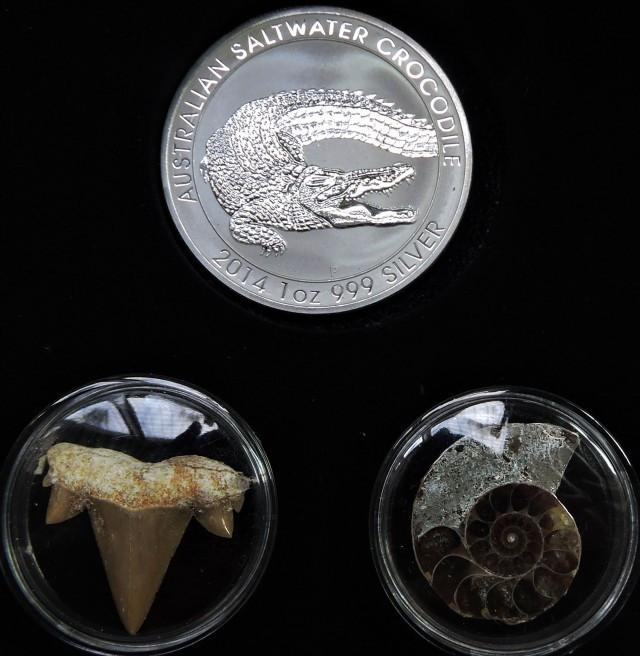 Silver Salt Crocodile with Ammonite & Shark tooth CC102