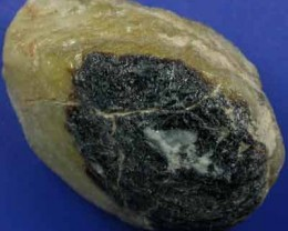 MUSSEL FROM LIGHTNING  RIDGE[SF45] 31.08CTS