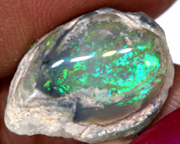 19.50 cts Opalized Fossilized Pippi Shell  Parcel FO-1399
