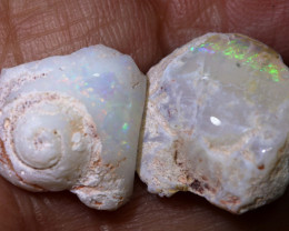 10.70cts opalised gastropod snail coober pedy   FO-1528