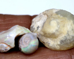 12.85 cts opalised gastropod snail coober pedy parcel FO-1565