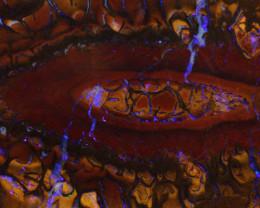 450 cts   Koroit Opal Fusion Rough  DO-1668