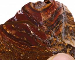 Koroit Boulder Opal  Rough  DO-1671 - downunderopals