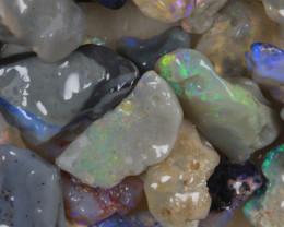 NO RESERVE!! #8  -Beginners Rough Opal -L Ridge [33309] 53FROGS