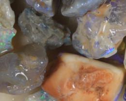 NO RESERVE!! #8  -Beginners Rough Opal -L Ridge [34106] 53FROGS