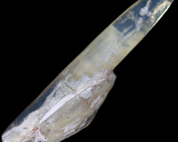 17.15 CTS BELEMNITE  AND SHELL FOSSIL ON HOST ROCK SPECIMEN [SOBOX113]