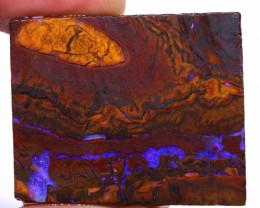 Koroit Boulder Opal Rough  DO-2159 - downunderopals