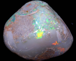 109.40 CTS    CLAM SHELL OPALISED FOSSIL  FO-1712   fossilopals