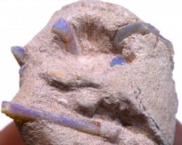 95cts  DETAIMENTAL SHELL  PARCEL -box  fossilopals
