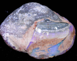 110.15CTS  CLAM SHELL OPALISED FOSSIL  FO-1837   fossilopals