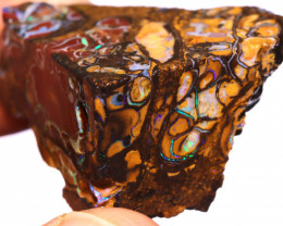 Koroit Boulder Opal Faced Rough DO-2340  - downunderopals