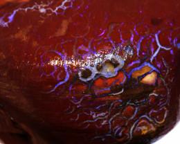 Koroit Boulder Opal Faced Rough DO-2607  - downunderopals