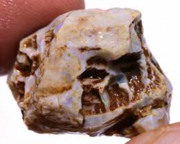 Opalized Fossil  DO-2651 - downunderopals
